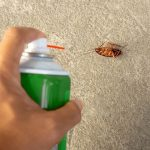 Why Hire An Exterminator For Your Pest Problems?