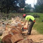 The Potential Benefits Of Tree Removal Services